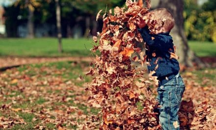 Celebrate Autumn With These Fall Activities